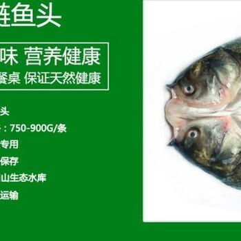 安徽三珍食品冷冻新鲜鲢鱼头鱼身鱼尾花鲢白鲢