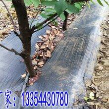 沧州耐用防草布,园艺地布图片