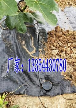 批发广东防草布,型号全,质量可靠,广东省农户享优惠价格