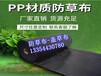 防草布-黑色園藝地布/蘑菇防草布生產廠家