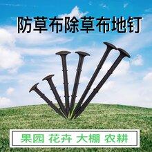 防草布固定用地钉,11厘米,16厘米,20厘米图片