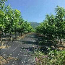黑龙江销售防草布量大从优,园艺地布图片
