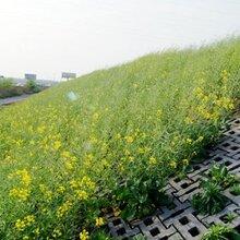 生产生态砌块生态渗滤砌块鱼巢砖WE砌块图片