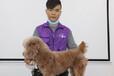 吉林宠物美容培训学校派多格