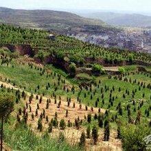 农林保水剂法国爱原装进口图片