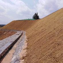 云南保山山体喷播绿化工程高次团粒剂厂家直销图片