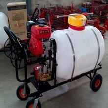 手推式电动喷雾器果农林园汽油高压打药机加厚桶体抗高压冲击图片
