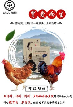 鸡腺胃炎4天治愈-鸡腺胃炎用什么药-快速问兽医