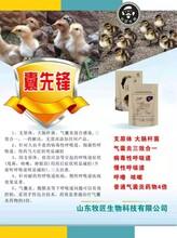 雞吭哧甩鼻咳嗽呼嚕,雞氣囊炎如何防治,雞氣囊炎用藥圖片