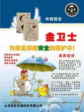 鸭子得了鸭肝咋治疗超能量预防鸭肝效果好图片