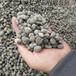 本格供应保温陶粒建筑回填轻质陶粒