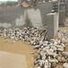 连云港天然鹅卵石生产厂家
