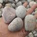 泰州抛光鹅卵石多少钱一吨