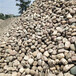 平顶山电厂用鹅卵石多少钱一吨