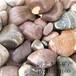 呼和浩特天然鵝卵石多少錢一噸