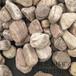 无锡鹅卵石滤料生产厂家