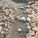 承德大块鹅卵石生产厂家