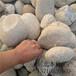 济南河卵石批发价格