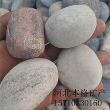 乌海抛光鹅卵石价格图片