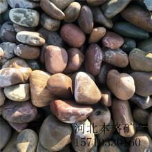 赤峰河卵石批发图片