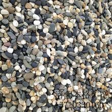 郑州变压器鹅卵石价格图片