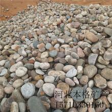 赤峰大块鹅卵石厂家图片