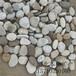 锦州鹅卵石滤料批发价格