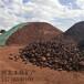 雞西多肉火山石生產廠家