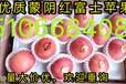 山東優質紅富士蘋果