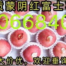 山东优质红富士苹果