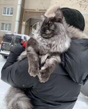 純種貓品種圖片圖片