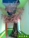 恒美景觀仿真樹制作,棗莊仿真樹圖片信譽保證