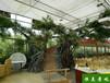 蘇州環保恒美景觀仿真樹圖片仿真樹施工