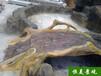 恒美景觀水泥仿木欄桿施工,揚州環保水泥仿木紋圖片廠家直銷