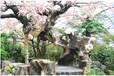 鹽城恒美室內仿真櫻花樹展示廠家直銷,室內包柱仿真花樹