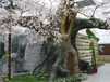 杭州恒美室內仿真櫻花樹展示造型美觀