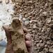 供應保定容城洗沙選礦泥漿處理設備定制履帶式壓濾機廠家