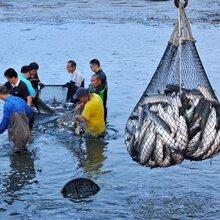 养殖黑鱼技术视频全套资料黑鱼养殖视频教学图片