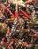 小龙虾价格