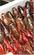 潜水小龙虾