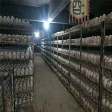 江苏扬州纯粮食酒代加工白酒代工图片