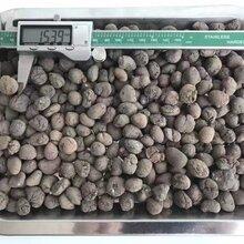 合肥陶粒廠家,合肥陶粒批發,合肥陶粒價格,足方足量,送貨上門圖片