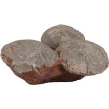 恐龙蛋化石现在能卖到多少钱?