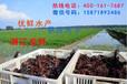 北京優鮮水產活蝦價格性價比最高