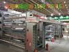 中州牧業雞糞傳送設備橫斜向清糞機雞糞運輸帶