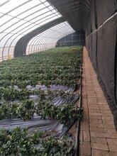 贵贵温室-温室大棚-温室工程-温室设计-温室建造
