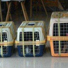濮阳宠物托运濮阳宠物空运濮阳宠物铁路托运濮阳活体运输图片