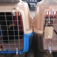 许昌宠物托运许昌宠物空运许昌宠物铁路托运许昌活体运输图片