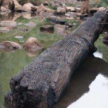 四川广安哪里可以交易阴沉木?