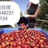 黑龙江直招出国人员工种多下签快薪资高保顺利出国